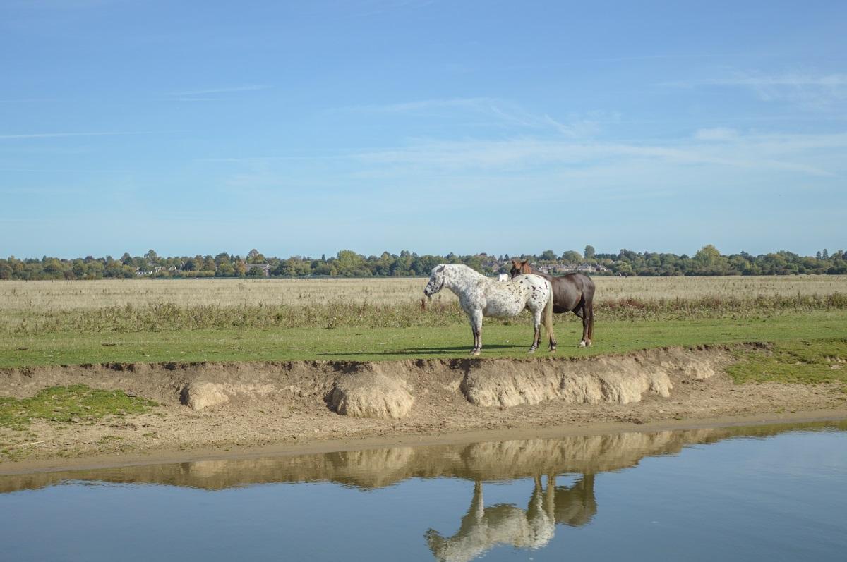 Co-tu-robia-konie-Tamiza